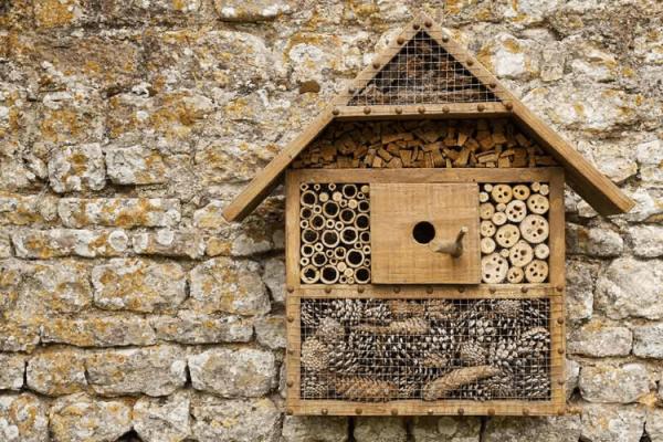 Comment la Construction des Hôtels à Insectes peut-elle Sauver votre Jardin de la Solitude ?
