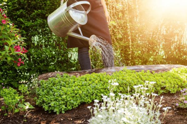 Arrosage du Jardin : Comment Économiser de l'Eau et de l'Argent en Même Temps ?