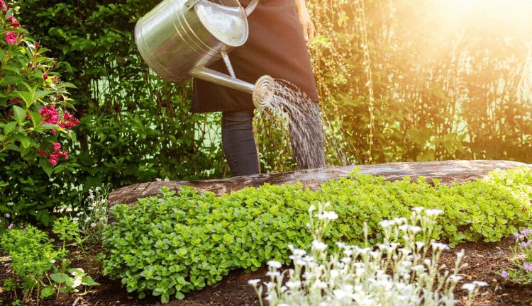 comment-moins-arroser-son-jardin