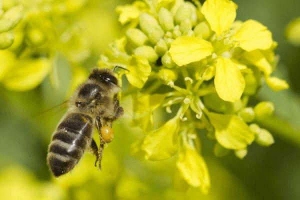 5 Façons Simples Pour Sauver les Insectes en Voie de Disparition