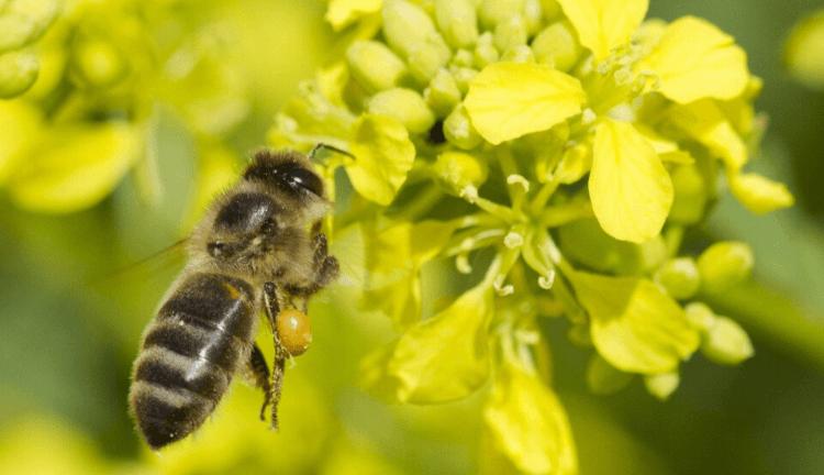 comment-sauver-les-insectes hotel-a-insecte-palette