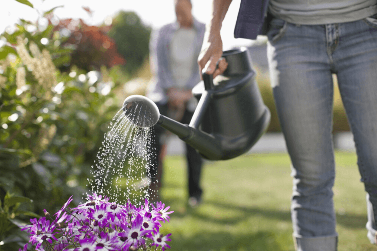 faut-il-arroser-son-jardin-tous-les-jours