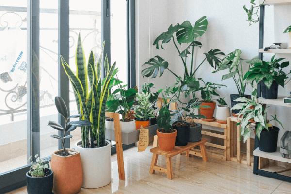 Comment Prendre Soin des Plantes d'Intérieur en Hiver ?