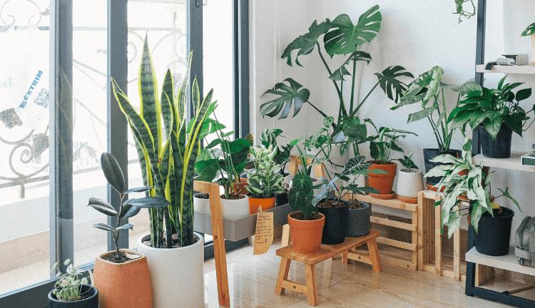 les-plus-belles-plantes-dinterieur