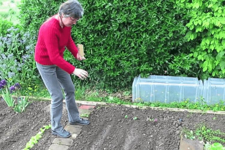 planter-des-haricots-blancs