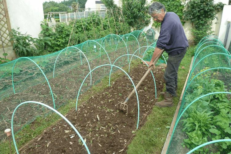 planter-les-haricots-nains