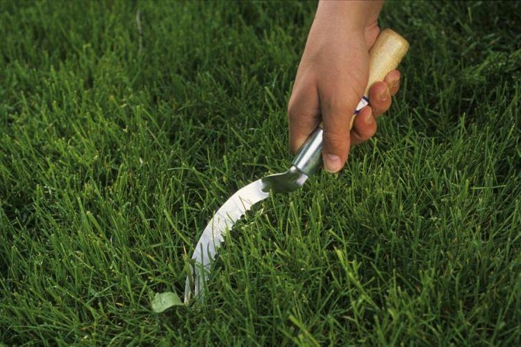comment étoffer sa pelouse